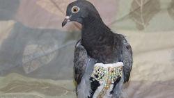 Gezochte eigenaars van duif in glitterpakje uit Arizona gevonden