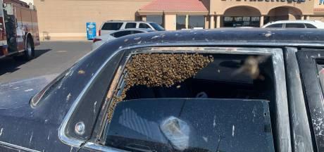 Il découvre 15.000 abeilles dans sa voiture en rentrant du supermarché
