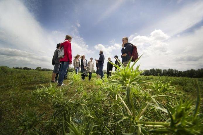 In de uiterwaarden doen leerlingen inspiratie op voor de natuurlijke ontwikkeling van het Nijmeegse stadseiland. foto Eveline van Elk