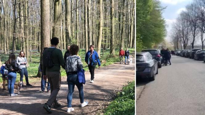 Duizenden bezoekers in Hallerbos ondanks maatregelen om toeristen weg te houden