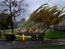 Laanbomen langs grote doorgaande wegen in Den Bosch