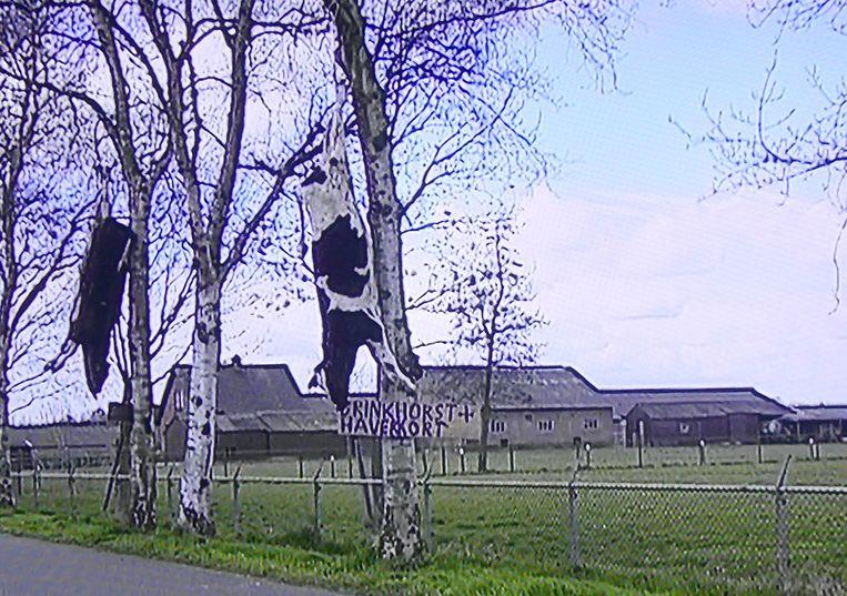 Koeienkadavers in de bomen tijdens de MKZ-crisis 2001, zoals te zien in De boerenrepubliek. Beeld BNNVara