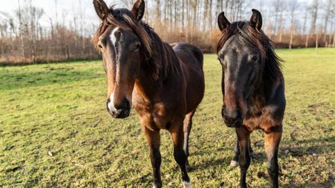 Paarden breken 's nachts uit: landbouwer kan botsing maar nipt vermijden