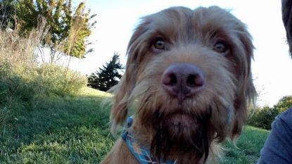 Opmerkelijk: hond is kandidaat-gouverneur in Kansas