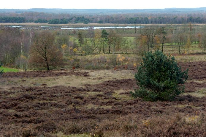 Een foto van nog geen tien jaar geleden vanaf de Friezenberg. Op de achtergrond het Elsenerveen, waar toen nog water aan de oppervlakte kwam; nu is die grond kurkdroog als gevolg van ontwatering.