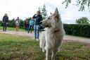 Hulphond Veron speelt de hoofdrol in de praktijkopdracht voor studenten van de nieuwe post hbo-opleiding Therapie met inzet van dieren.