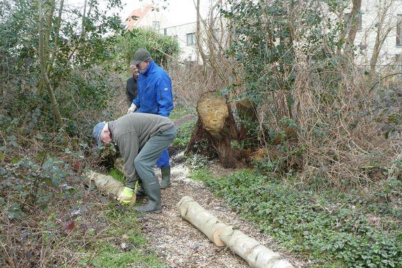 De vrijwilligers van Natuurpunt verwijderen omgewaaide bomen van de wandelpaden in Bos N in Boom.