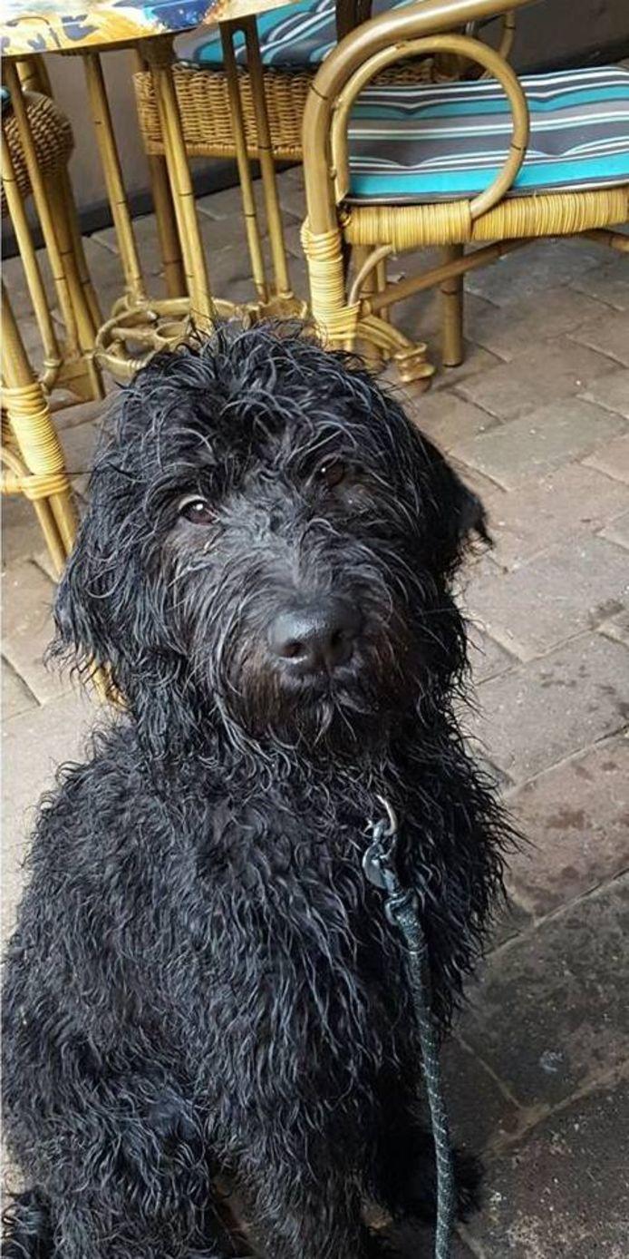 De in Lochem vermiste hond Smokey