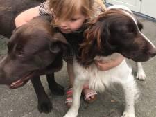 Ontvoerde hond Pleun uit Netersel ook weer terecht