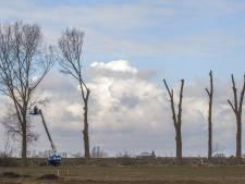 Omzichtige bomenkap bij Helbergen