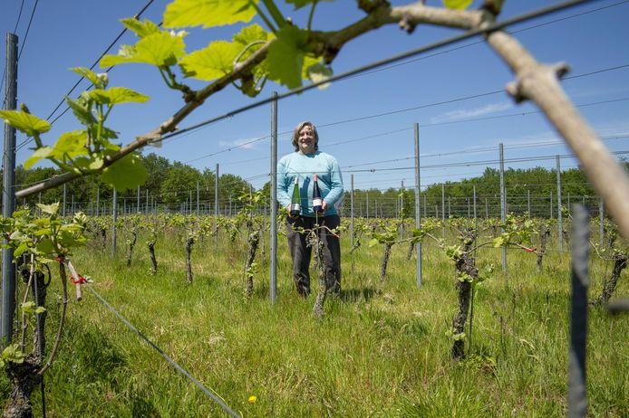 Wijnbouwer Louis Moons uit Heist-op-den-Berg verwelkomt bezoekers tijdens de Dag van de Landbouw.