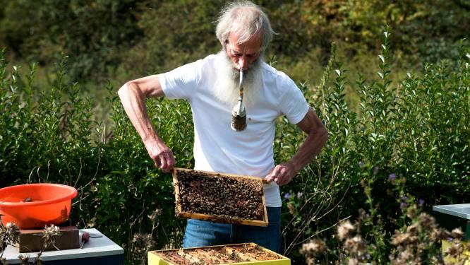Woerden moet een paradijs voor bijen worden: 'Op naar bijenhoofdstad van Nederland'