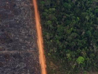 Waarom Bolsonaro zelf het Amazonegebied wil koloniseren