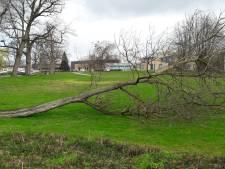 Stormramp(je) schrikt wandelaars in Berkelpark in Borculo op