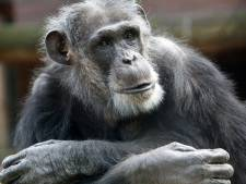 Tegenstanders willen van zoo af: 'Dierentuin is koloniaal relikwie'