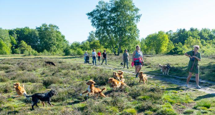 Voor hondenbezitters is de Groevenbeekse Heide in Ermelo een geliefd gebied om te wandelen, vaak trekken ze er gezamenlijk op uit. Ze zijn een petitie gestart om handtekeningen te verzamelen om het losloopgebied open te houden voor honden.