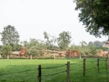 Boze buren na bomenkap in Geesteren;  Tubbergen wil hiaat in regelgeving oplossen