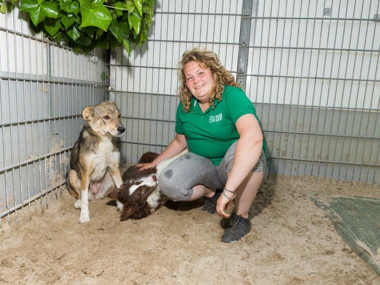Verzorger Esther Balfoort met Oostblok-honden Lina (links) en Fos.  Beeld Ivo van der Bent