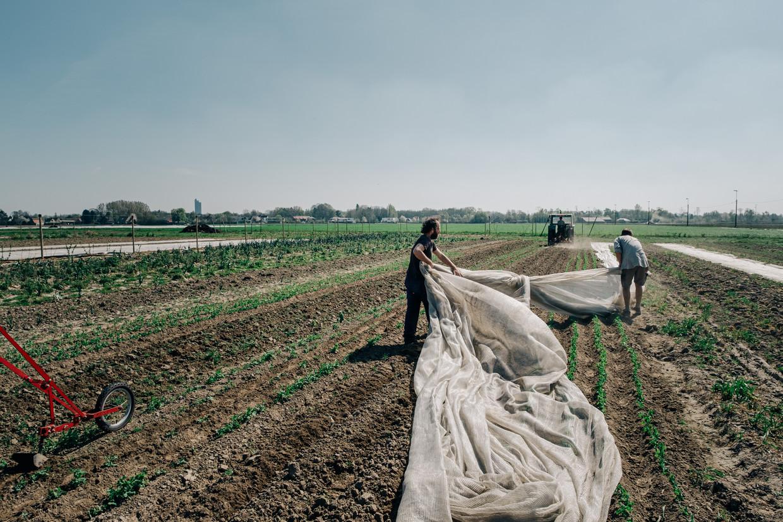 De Goedinge, een voorbeeld van Community Supported Agriculture, voorziet zo'n 340 mensen een heel jaar lang van groenten, fruit en kruiden.