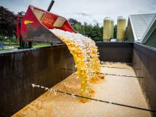 Milieucriminelen komen te makkelijk weg, zegt OM: 'Voor grote bedrijven stelt duizenden euro's boete niks voor'