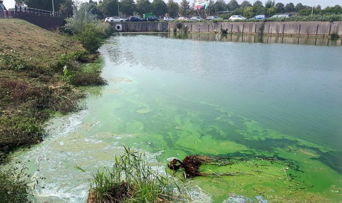 Het Zwaaigatconcert in Roosendaal is verplaatst vanwege blauwalg in het water,