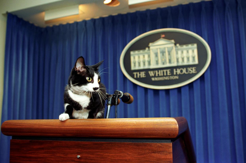Socks, de kat van de Clintons, woonde in het Witte Huis en nam zijn taak serieus, gezien deze foto waarop hij aanstalten maakt om de media te woord te staan. Beeld Barbara Kinney / publiek domein