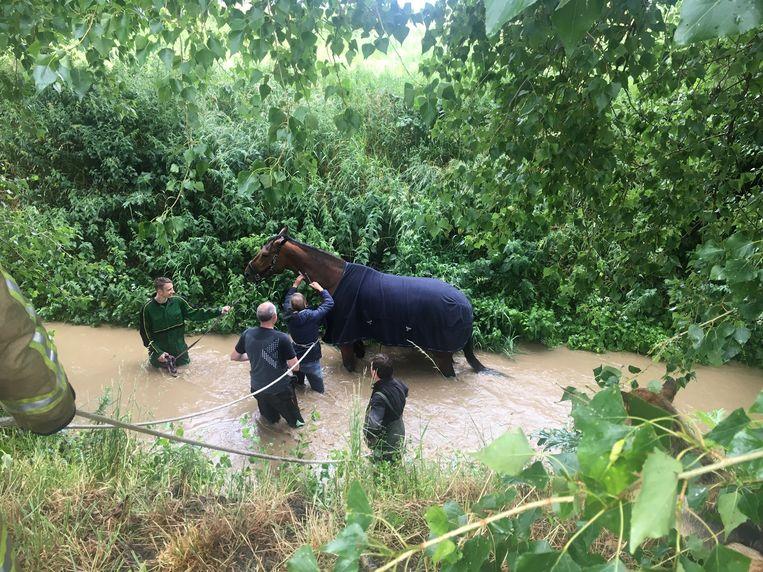Een dierenarts diende het paard in het water een krachtmiddel toe om  wat op krachten te komen.
