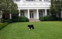 Bo in 2011 in de tuin van het Witte Huis.