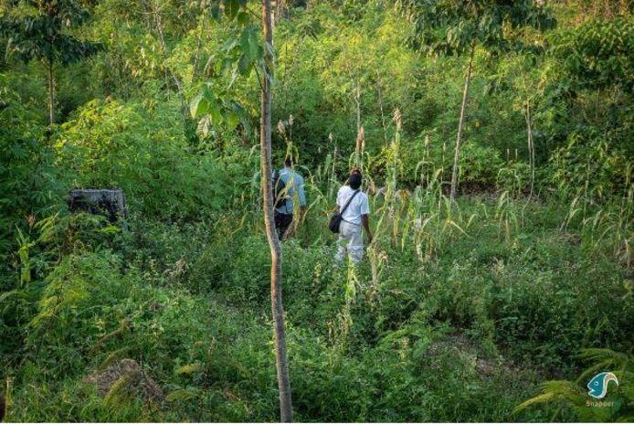 Balsabomen zorgen mee voor polycultuur bossen, met een biodivers ecosysteem.