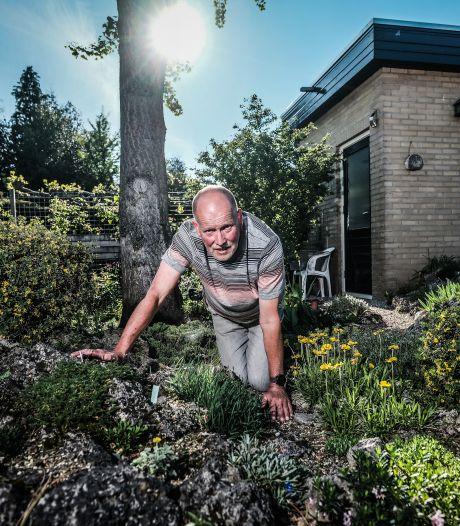 Theo (65) bootst de Alpen na in zijn rotstuin: 'Steenbreek, daphnes en krokussen, daar ben ik wel gek mee'