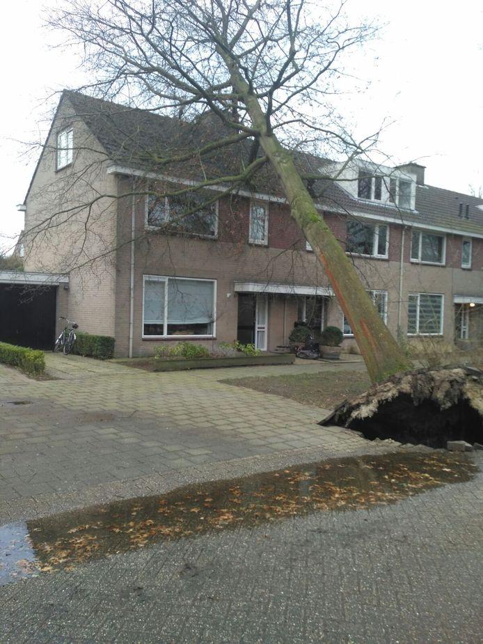 Daan de Jong
