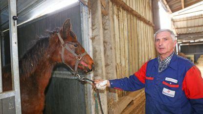 Honden vallen jonge paarden aan in weide: één dier bezwijkt aan bijtwonden