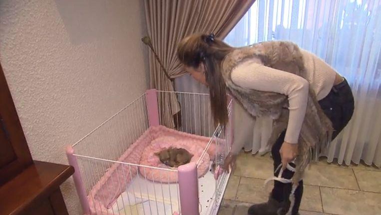 Chihuahua Lady is net mee uit wandelen genomen door de dochter van Nieky Holzken, zag tv-criticus Han Lips. Beeld RTL