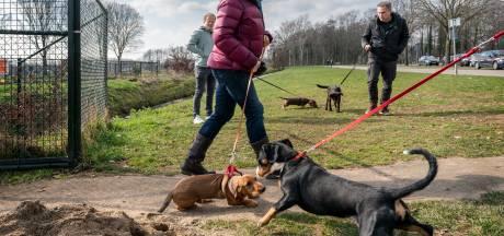 Apeldoornse hondenschool stopt noodgedwongen door coronaregels: 'Ik ga niet stiekem met vier honden trainen'