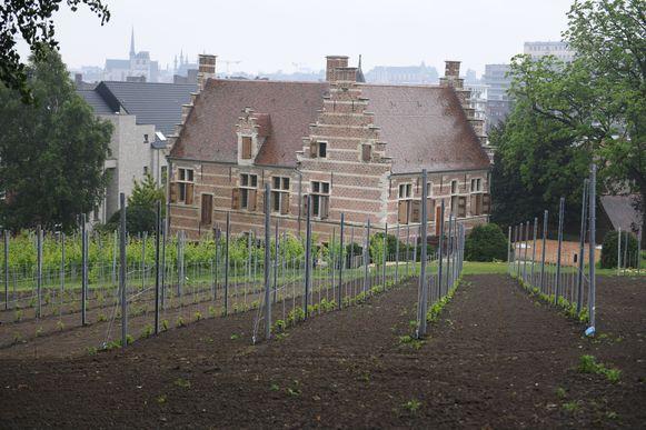 De wijngaard van De Wijnpers zou zo'n 650 flessen moeten opleveren.