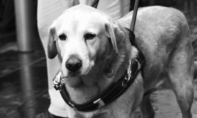 Blinde man jarenlang gepest: 'Ze maken mij en m'n hond kapot'