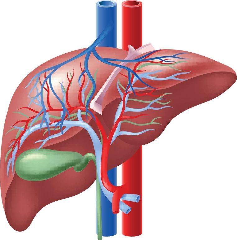 De galblaas zit naast de lever.