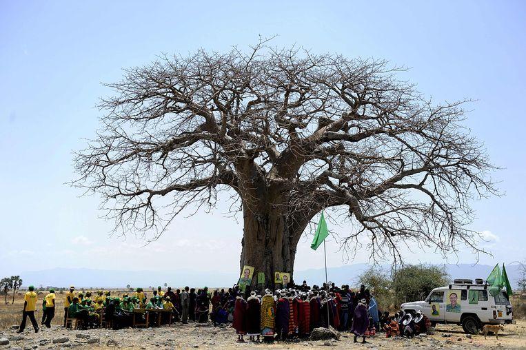 De baobab heeft ook een sociale functie. Hier komen Maasai bijeen onder gigant in Oltukai, Tanzania. Beeld AFP