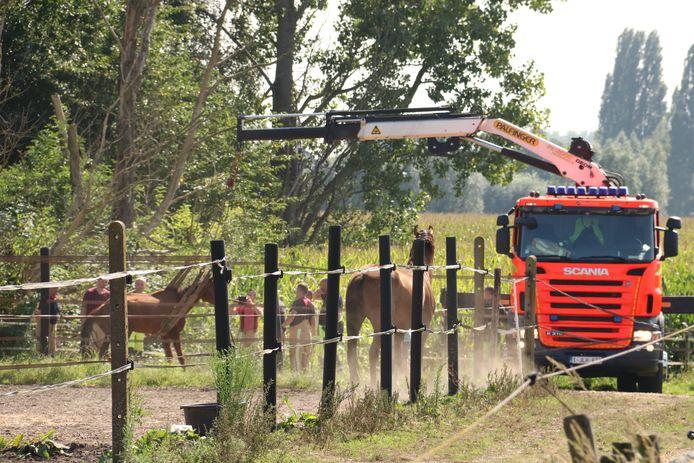 De brandweer moest het paard recht trekken.