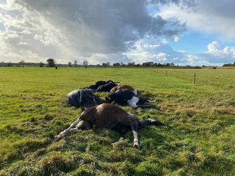 Blikseminslag wordt zeven paarden fataal: 'Slecht nieuws, dacht ik meteen'