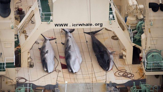 Walvissen aan boord van een Japans schip op een foto van begin vorig jaar.