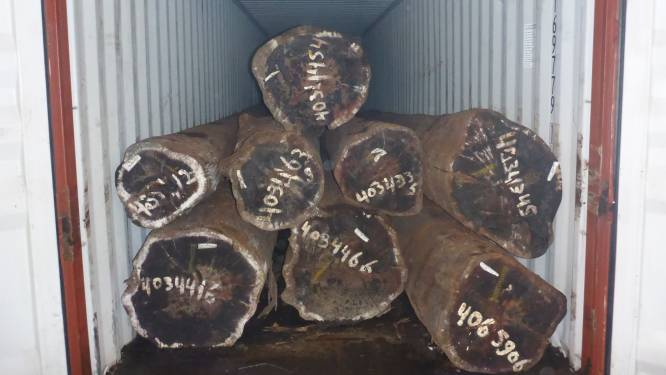 Tussen boomstammen verstopte megapartij coke onderschept in Rotterdamse haven