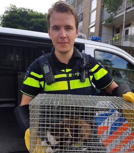 Politie haalt verwaarloosde katten weg tussen 'uitwerpselen van mens en dier' in Utrechtse woning