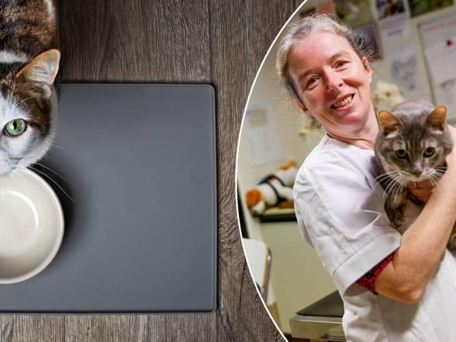 """Professor dierenvoeding waarschuwt mensen die zelf koken voor hun huisdier: """"Kan tot allerlei gezondheidsproblemen leiden"""""""