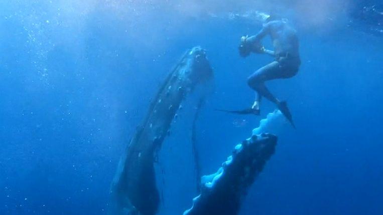 Duiker en walvis zwemmen in het rond