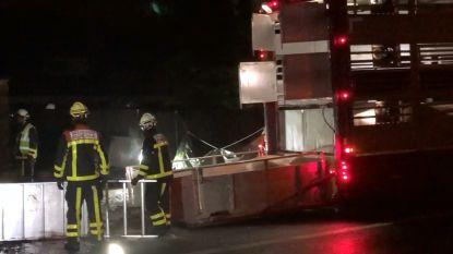Honderdtal varkens sterven bij ongeval met vrachtwagen in Brasschaat