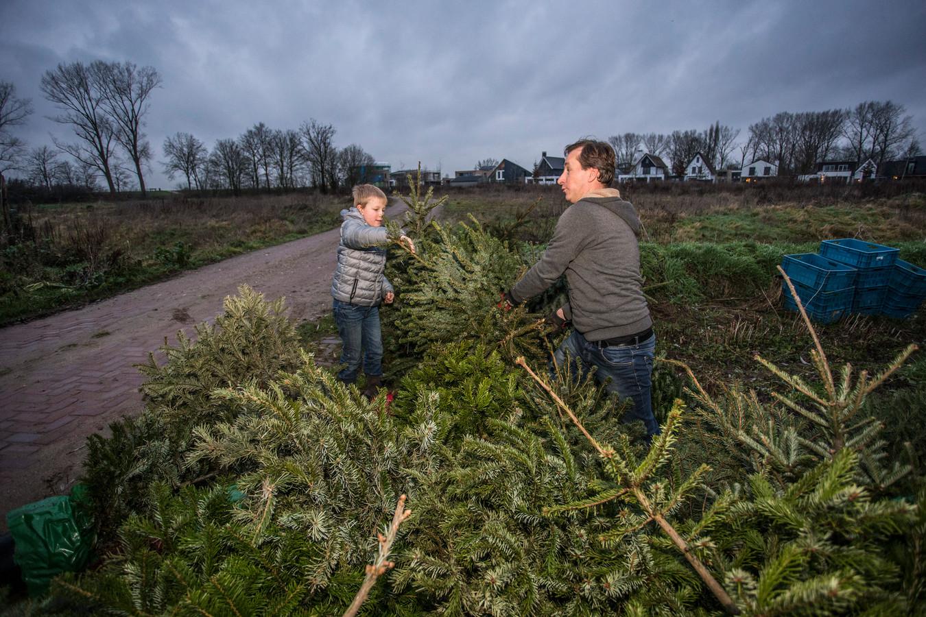 Niels Hartvelt krijgt in de kerstboomgaard hulp van zijn zoon Hugo.
