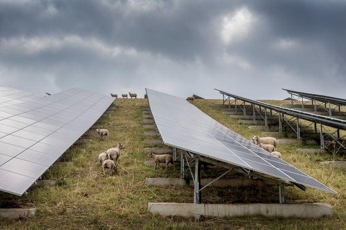 Schapen grazen tussen de zonnepanelen op het zonnepark bij Geldermalsen.