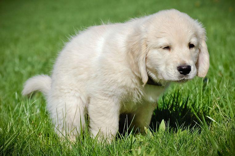 'Als handhaving ziet dat iemand de poep van zijn hond niet opruimt dan krijgt diegene natuurlijk een boete.' Beeld Getty Images/iStockphoto