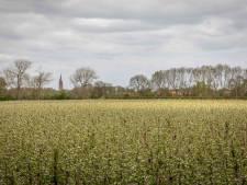 BZZB pleit voor proeftuin Zak van Zuid-Beveland